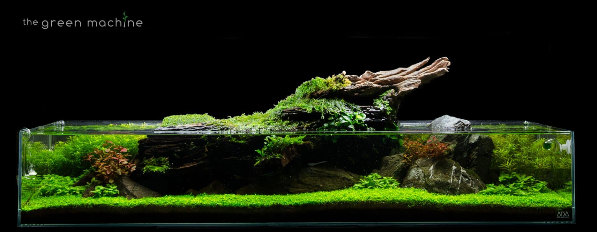 Shallow-Aquascape-by-James-Findley-The-Green-Machine-.jpg